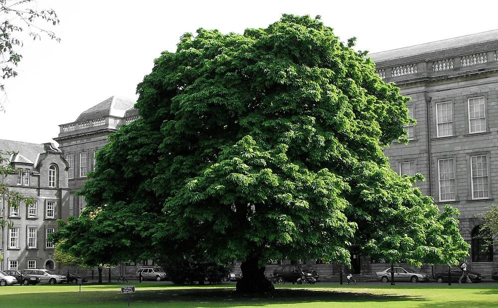Trinity tree by Christian Langenegger