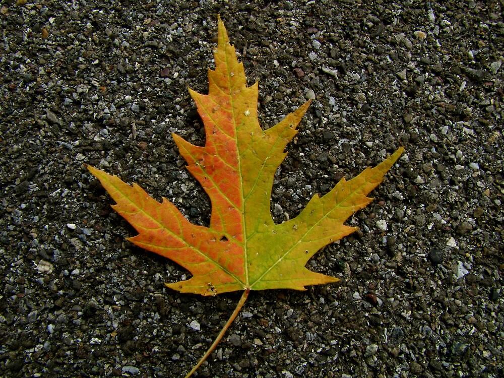 Fallen Leaf by Christian Langenegger
