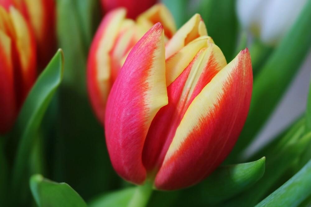 A Treasure in the Garden by Michiale