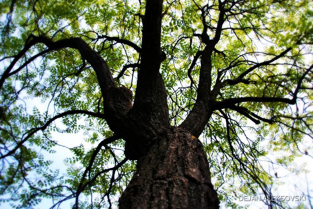 Another tree by DEJAN ALEKSOVSKI