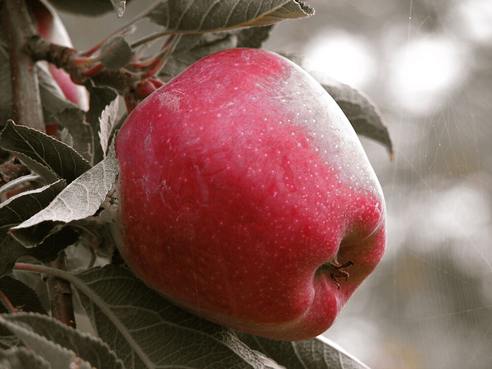 Red Okanagan Apple by Christian Langenegger