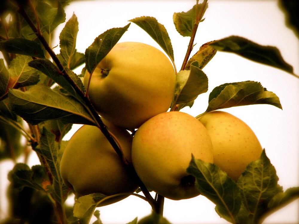 Golden Apples by Christian Langenegger