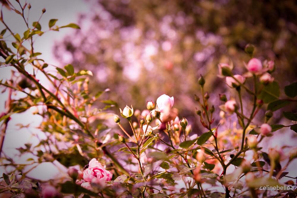 Rose by celinebelle