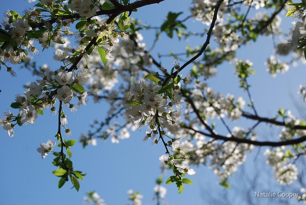 Sakura IV by Natalie Cooper