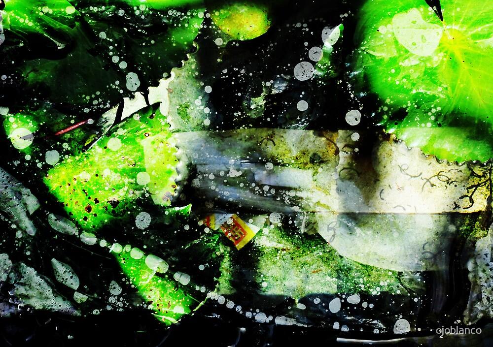 lotus pods, bali by ojoblanco