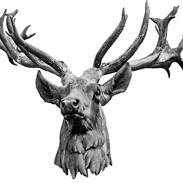 Stags Head by Dalyn