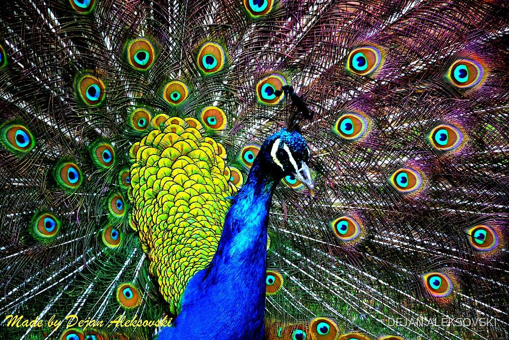 Peacock by DEJAN ALEKSOVSKI