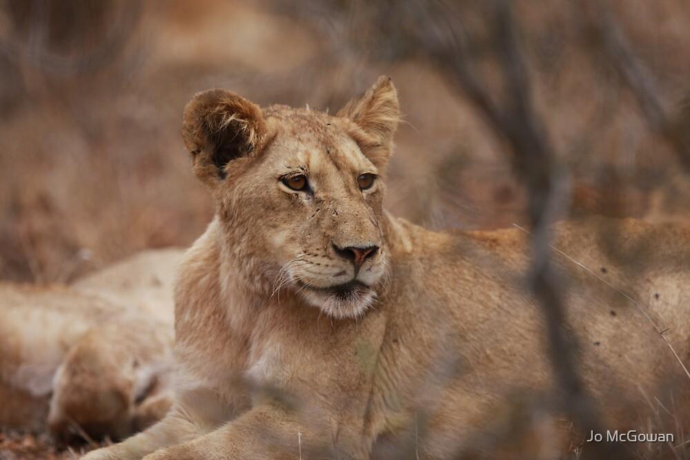 Lioness by Jo McGowan