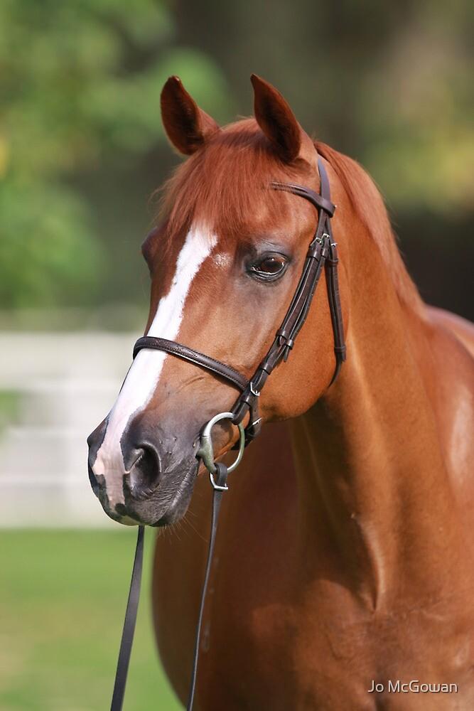 Chestnut Horse Portrait by Jo McGowan