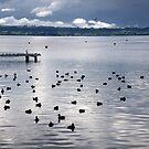 Dotted Ducks by Vonnstar