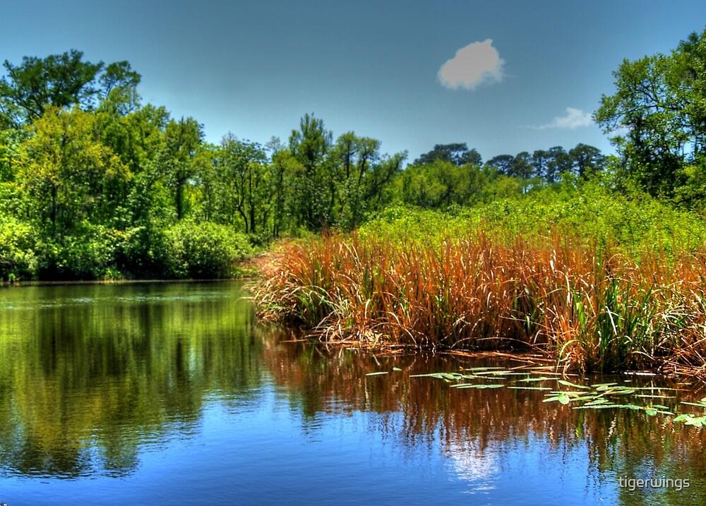 South Carolina Marsh by tigerwings