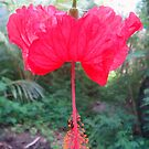 Hanging Hibiscus by Vonnstar
