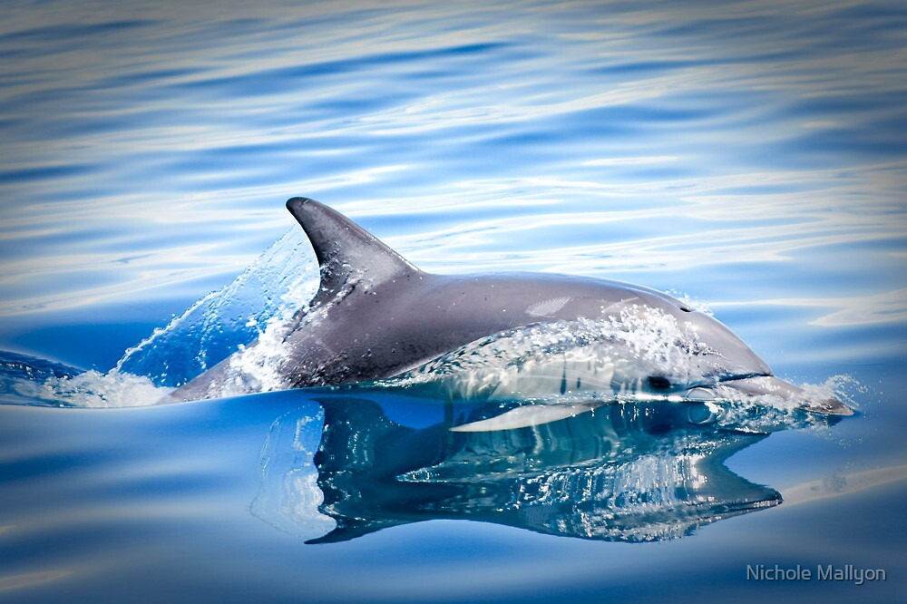 Dolphin Cutting Through the Water by Nichole Mallyon