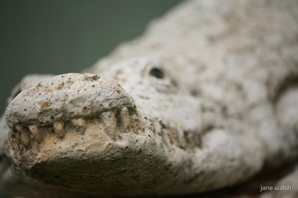 crocodile by jane walsh