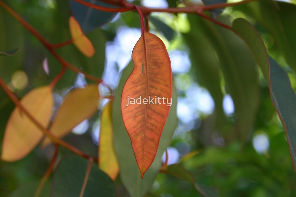 red gum leaf by jadekitty