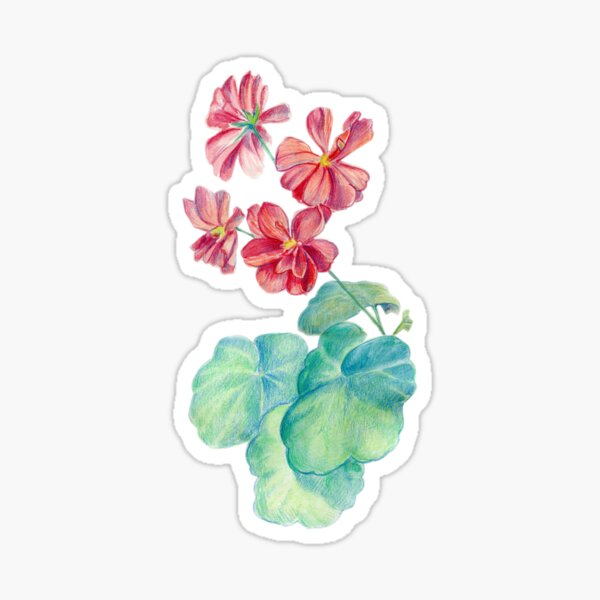 Red watercolor geranium Sticker