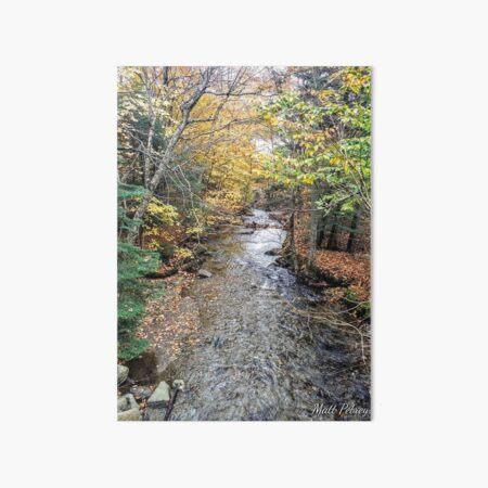 stream with foliage Art Board Print
