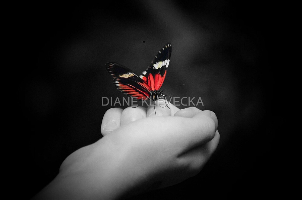 Butterfly Bliss by DIANE KLEVECKA
