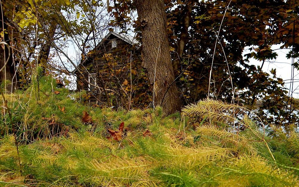 Abandoned Cottage III by mercale