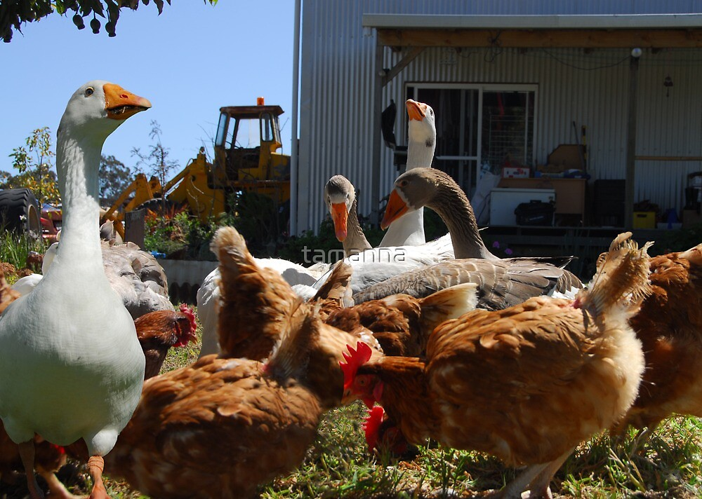 A day on the farm by tamanna