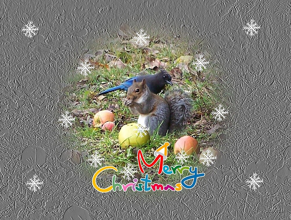 Squirrel And Steller Jay Merry Christmas Card by Jonice