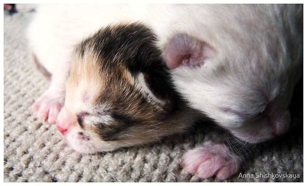 kittens IV by Anna Shishkovskaya