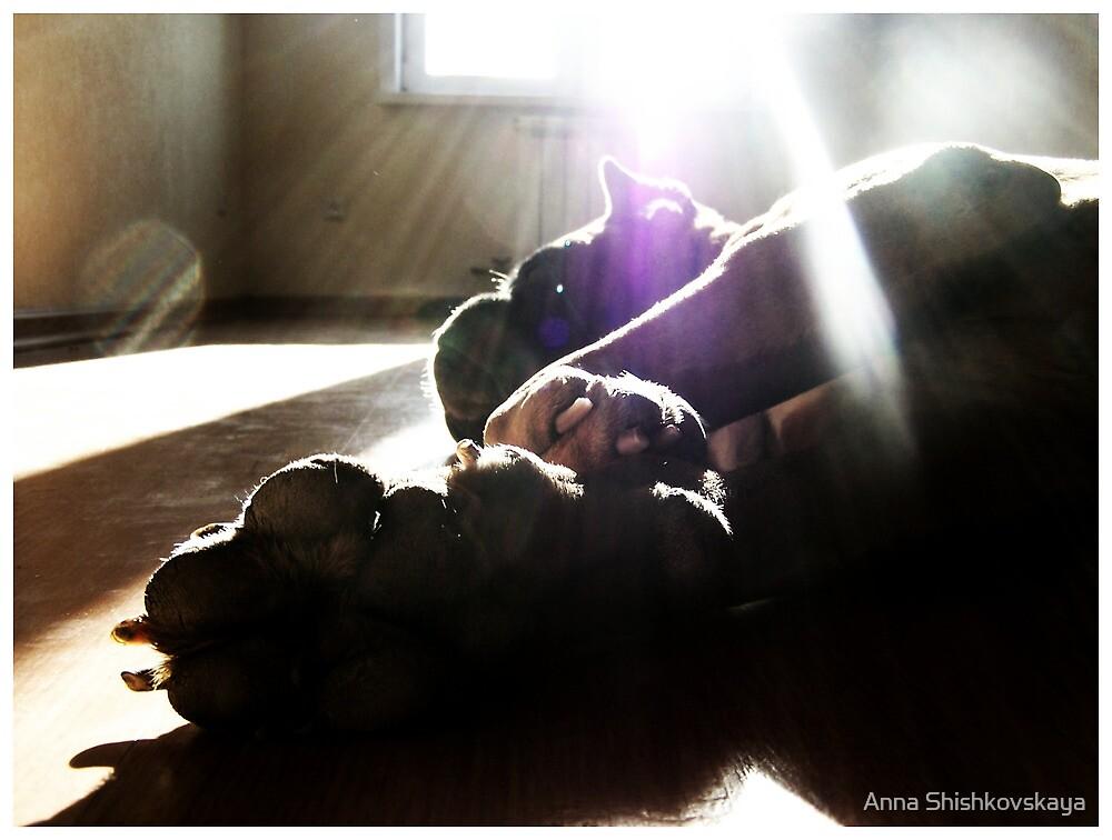 sun rises by Anna Shishkovskaya