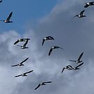The Birds 02 by Sharon Perrett