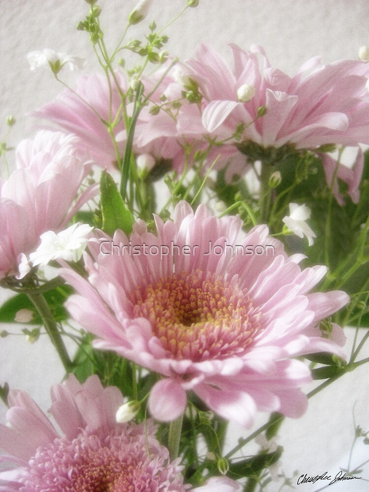 Pink Chrysanthemums 5 Simple by Christopher Johnson