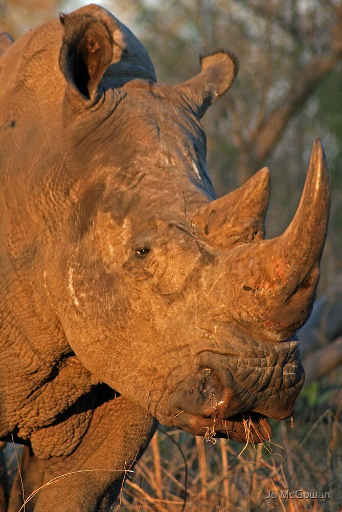 White Rhino by Jo McGowan