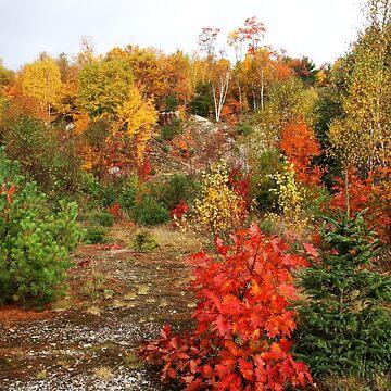 My Favorite Color Is October by debop