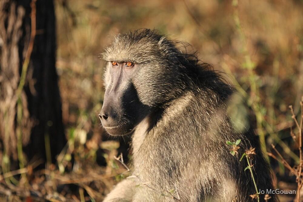 Male baboon by Jo McGowan