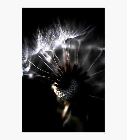 dandelion close up Photographic Print
