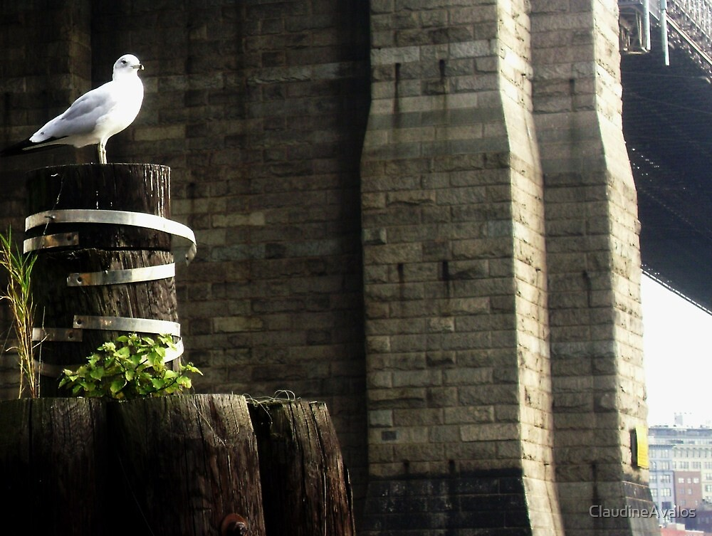 A nice Fall day for this seagull... by ClaudineAvalos