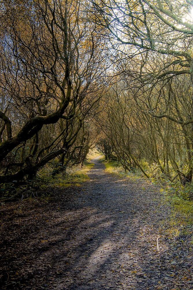 Autumn Path by spikearnott