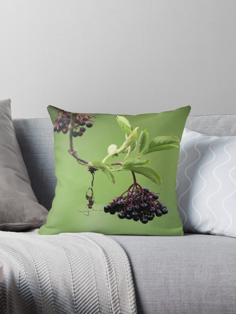 Elderberry by chihuahuashower