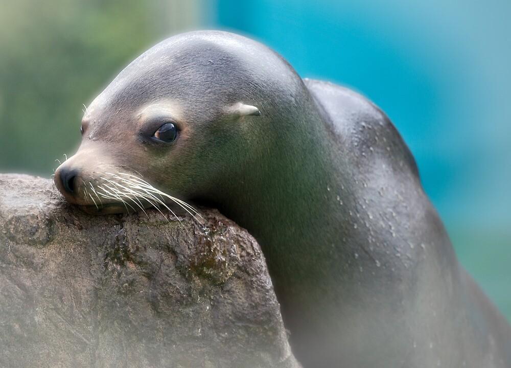 Slippery when wet - alluring sea lion by Maska