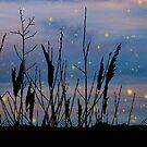 deep blue twilight marsh by chihuahuashower