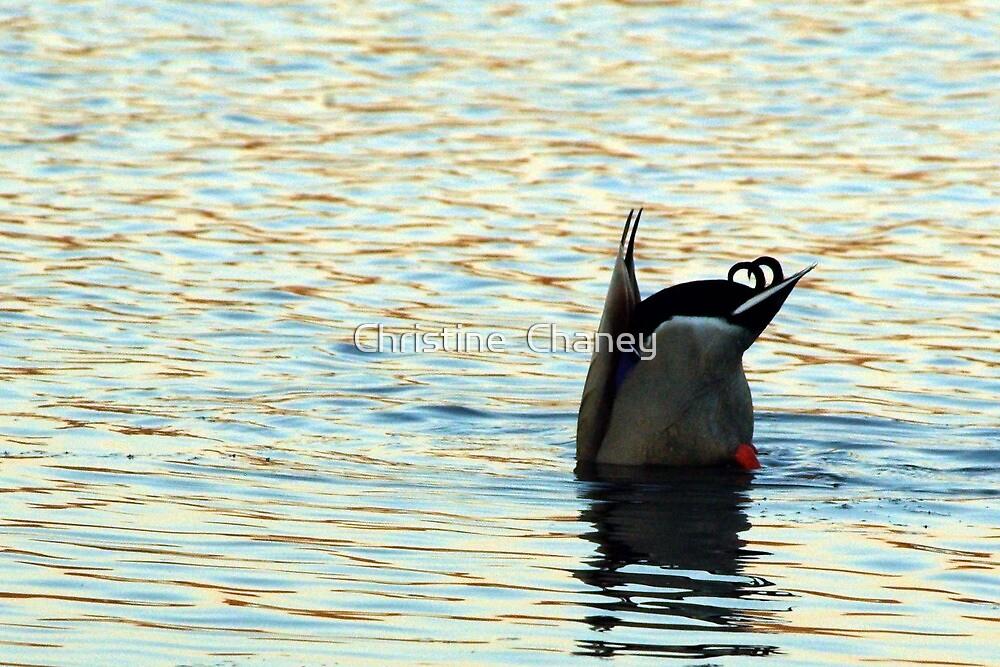 Wading by Christine  Chaney