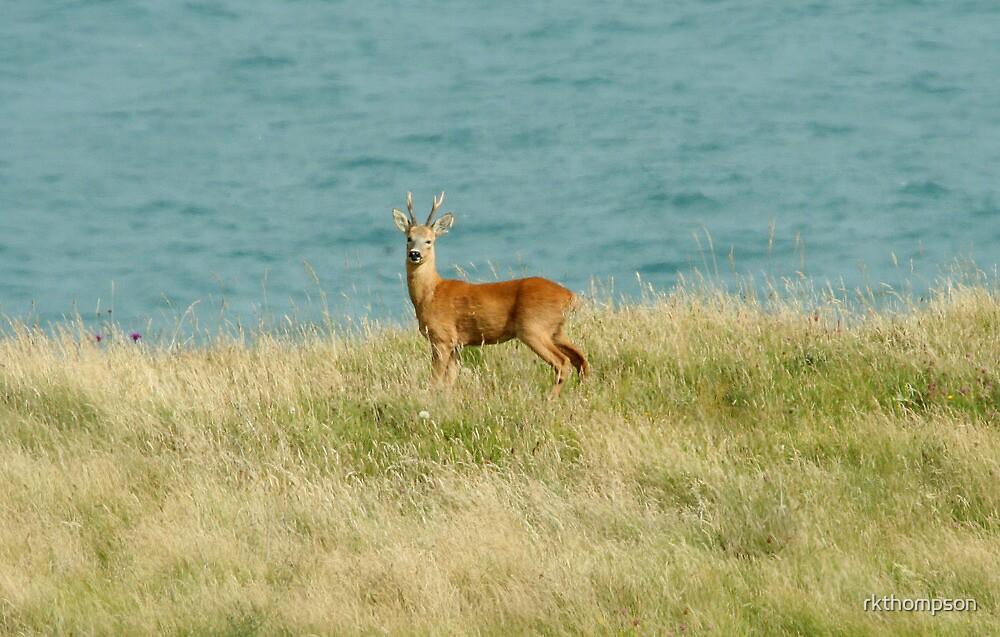 wild deer by rkthompson