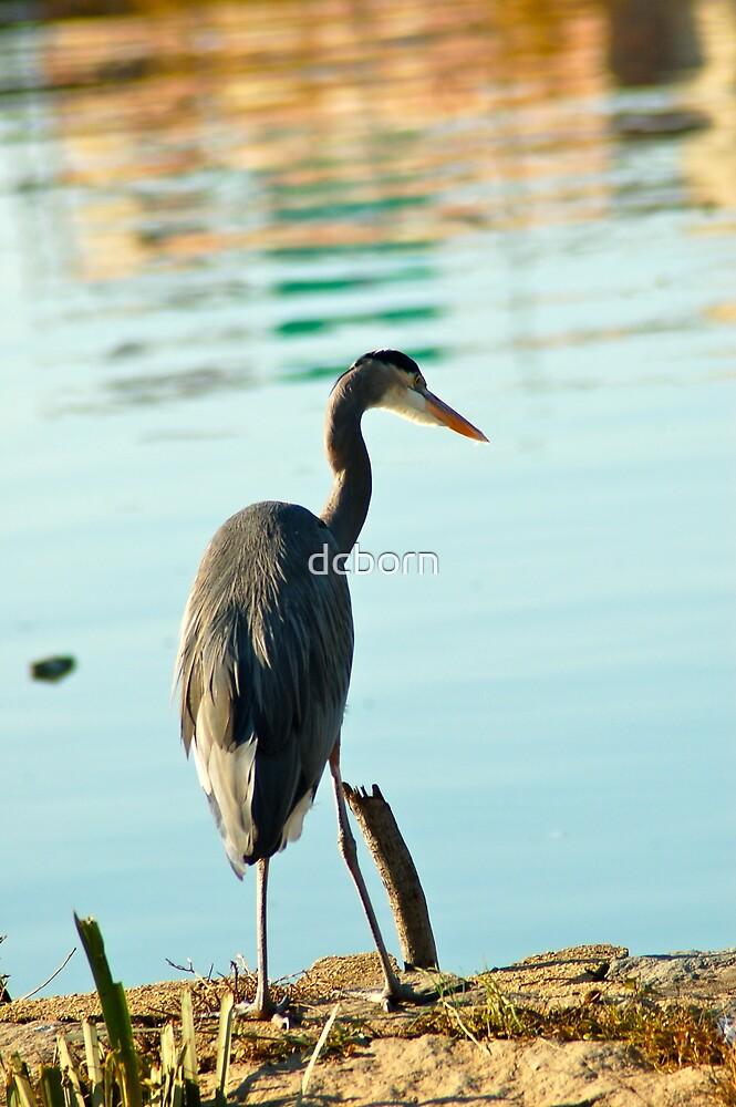 Bird Watching by dcborn