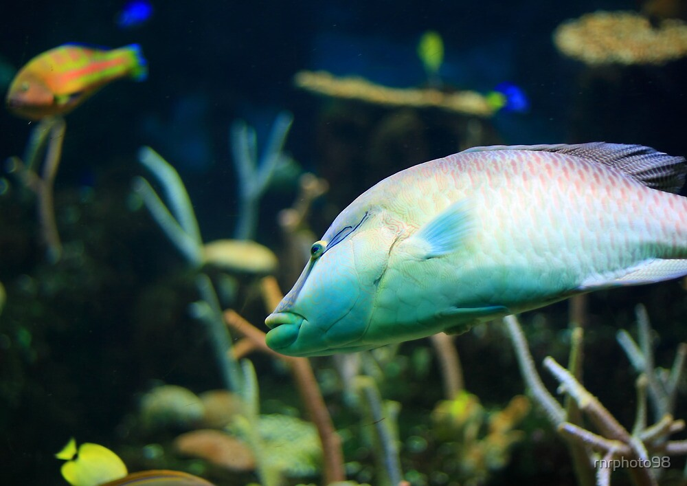 Big Tropical Fish by rnrphoto98