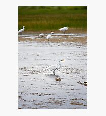 White Crane in Wetlands Photographic Print