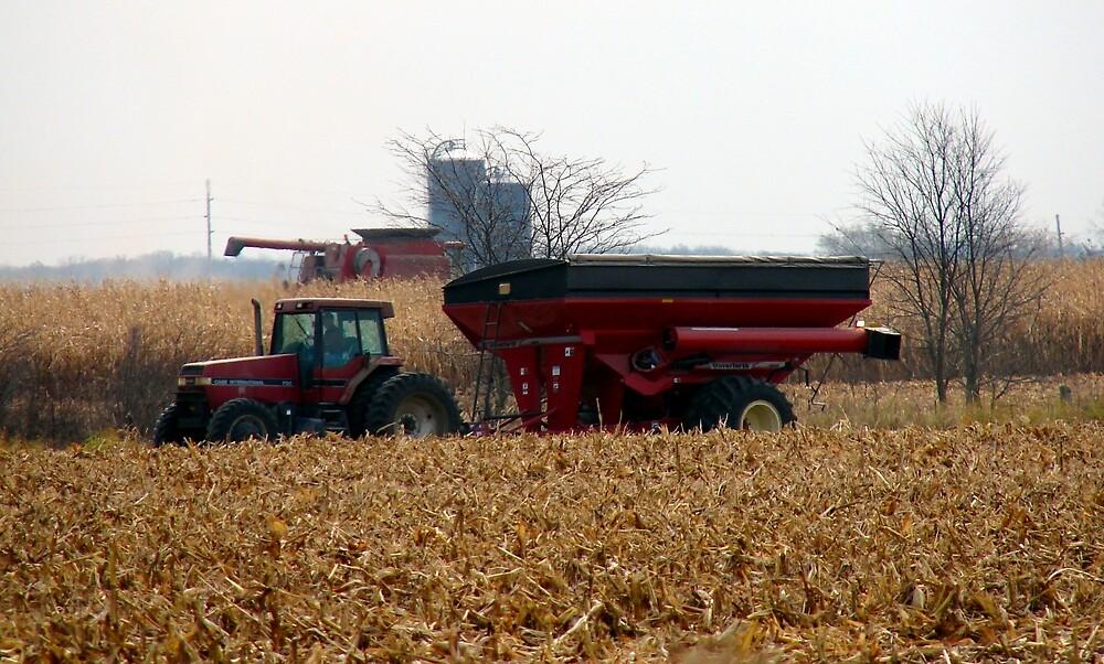 Harvest The Corn by angelandspot