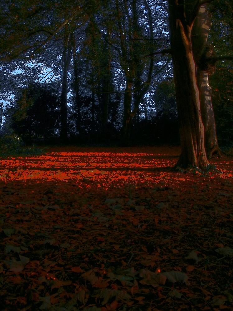 Forgotten footsteps  by Waeffe
