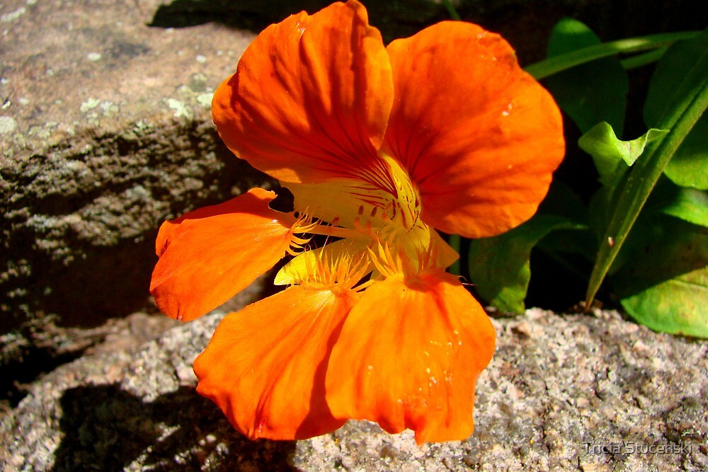 Simply orange by Tricia Stucenski