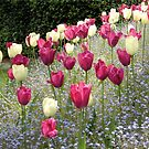 Tulips and Tulips by Esperanza Gallego