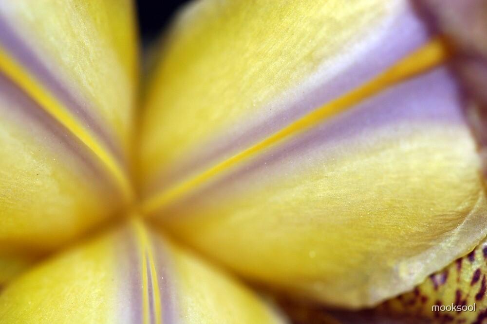 Iris centre by mooksool