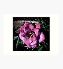Winter Park Baby Pink Rose Art Print