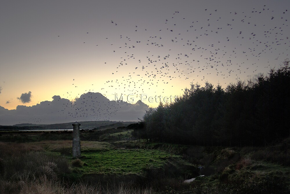 Starlings over the Memorial to Charlotte by M G  Pettett